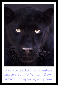 Boo the Panther.png